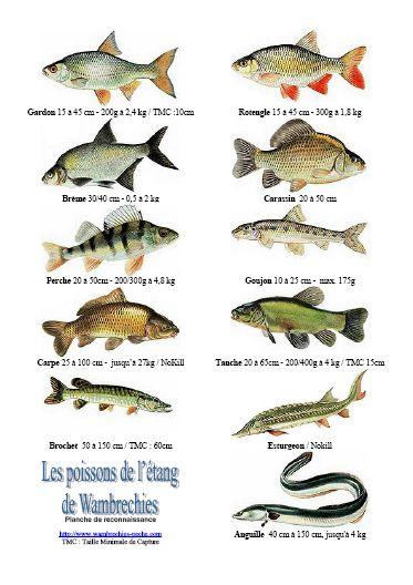 Poisson d 39 tang planche de reconnaissance for Acheter poisson vivant pour etang